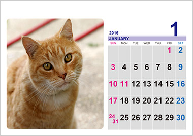 カレンダー カレンダー 写真 無料 : 写真入りフォトフレーム ...